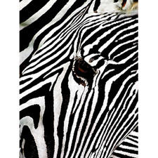 Classy Art goes up close with Zebra Study, a 40-by-60 inch gallery wrapped giclee (print on canvas) from the Canvas collection. classyart.net